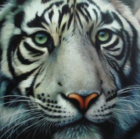 White-Tiger-by-Christiane-Vleugels