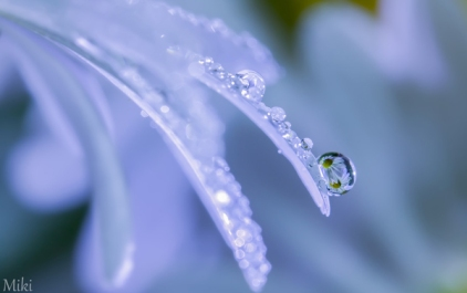 A-beautiful-little-world-by_-Miki-Asai