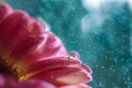 Drizzly-day-by_-Miki-Asai