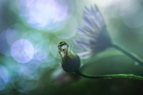 In-the-early-light-by_-Miki-Asai