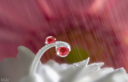 Morning-Shower-by_-Miki-Asai