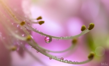 Spring-Dew-by_-Miki-Asai